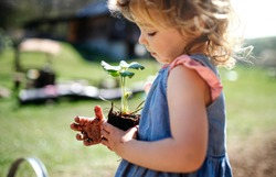 Small girl with dirty hands outdoors in garden, sustainable lifestyle concept.
