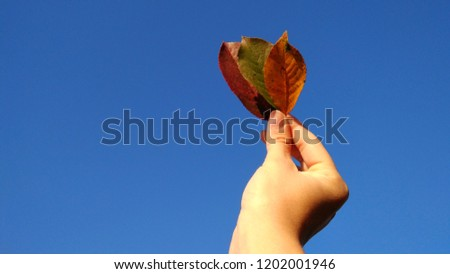 Small girl with three autumn leaves in her hand #1202001946