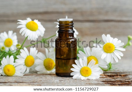 Small glass bottle with essential roman chamomile oil on the old wooden background. Chamomile flowers, close up. Aromatherapy, spa and herbal medicine ingredients. Copy space.