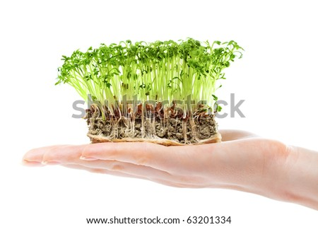 Small grass on woman hand. Isolated on white.