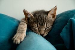 Small gray cat sleeping between green cushions