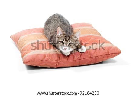 Small, gray kitten sleep on the red  pillow