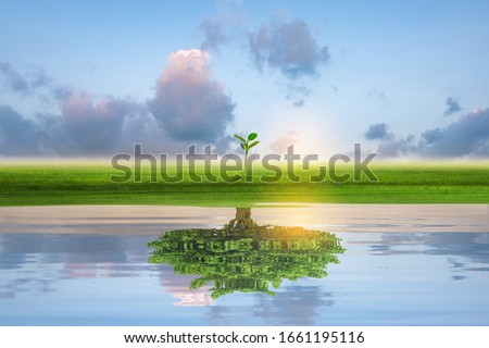 Small green island with lonely tree reflection in quiet water of the ocean. Financial business Concept. Stockfoto ©