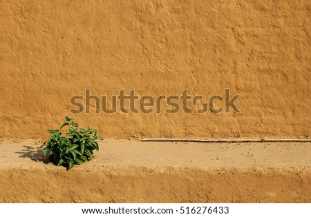 Small Green Plant against textured brown Indian wall #516276433