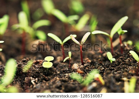 Small green plant. Agriculture concept.