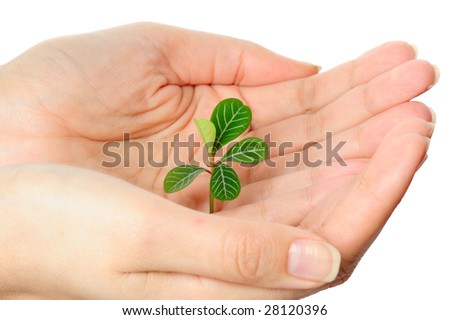 Small green plant in a hand