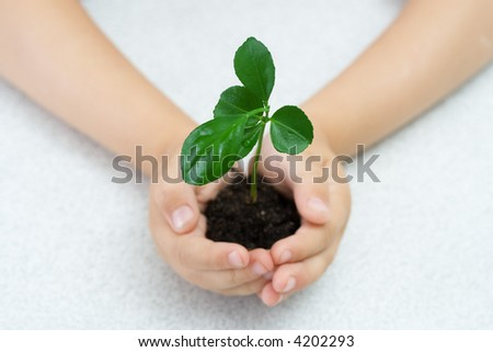 Small green plant in children's palms
