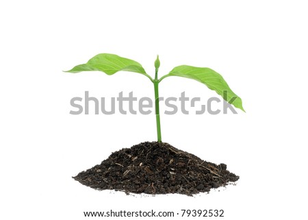 small green plant with soil on white