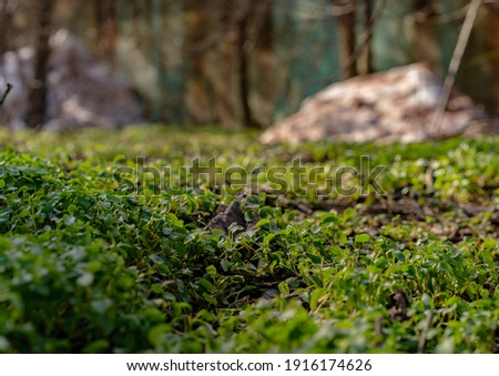 Small green plants sprout from the ground Сток-фото ©