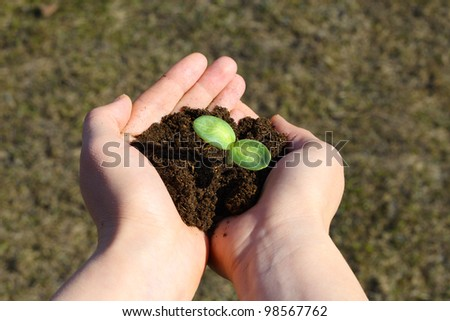Small green sapling in female hands