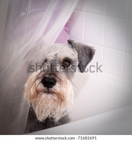 dog shower curtain on BedBathStore.com