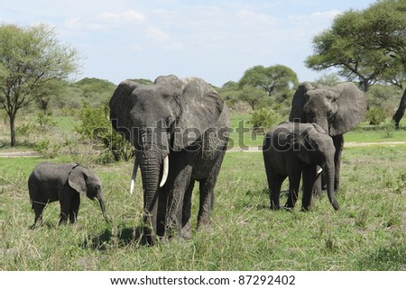 small group of Elephants in Tanzania