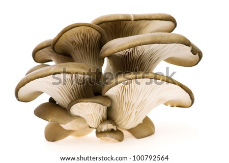 small group of oyster mushroom