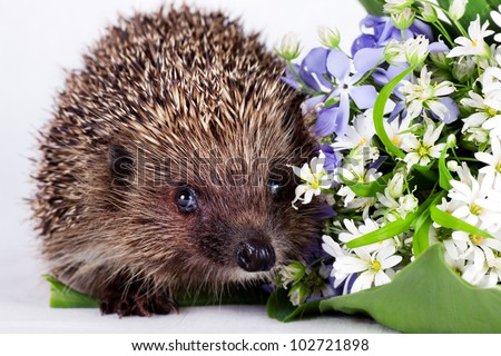 small Hedgehog and wild flowers