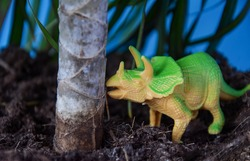 Small herbivorous dinosaur Triceratops under a palm tree, under a tree. Dinosaur model, Triceratops. Triceratops is an extinct animal of the Jurassic period, paleontology.
