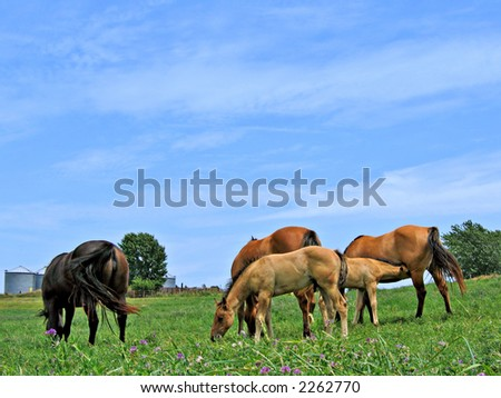 Small herd of mares and foals grazing in a pasture on a summer day #2262770