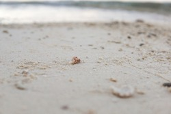 small hermit crab on white sand beach in the Philippines, Bohol