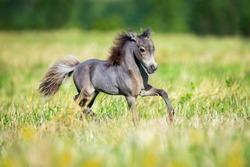 Small horse running in field