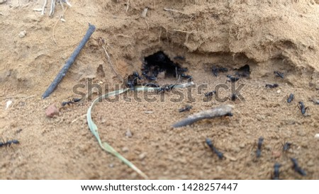 Worm in the ground on a white background Images and Stock