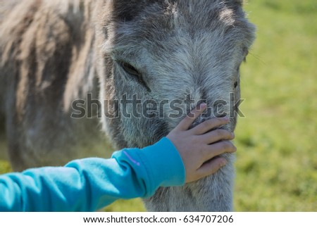 Small hug. The child's hand resting on the head of a donkey.