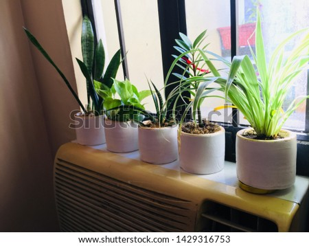 Small indoor plants perfect for your home or office. Welcome plant. Snake plant. Spider plant. Golden pothos. Sansevieria fernwood mikado. #1429316753
