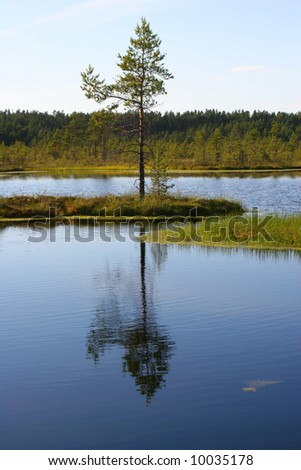 Small island with a pine in the middle of a bog