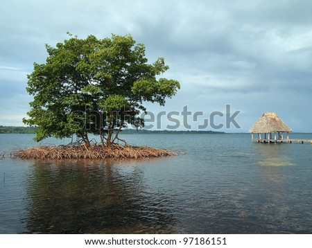 Small islet of mangrove tree with a thatched roof hut over water in background, archipelago of Bocas del Toro, Caribbean sea, Panama