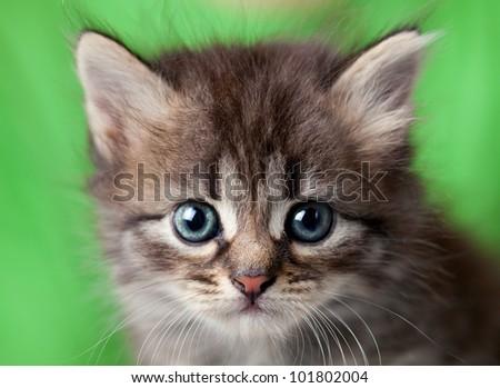 Small kitten - stock photo