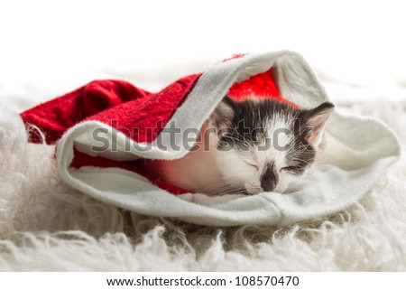 Small kitten as a gift for Christmas