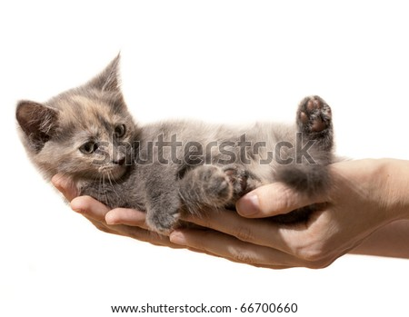 Small Kitten being held in hands of woman