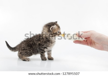 small kitten eating milk from the bottle