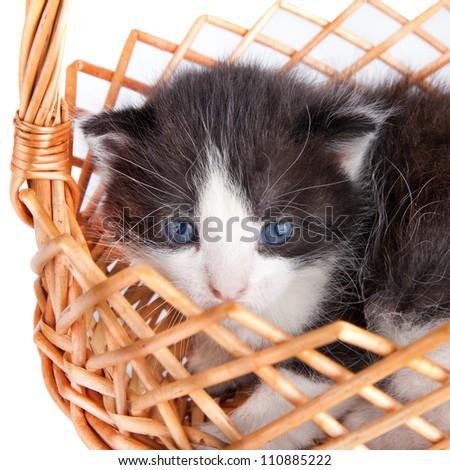 small kitten in basket