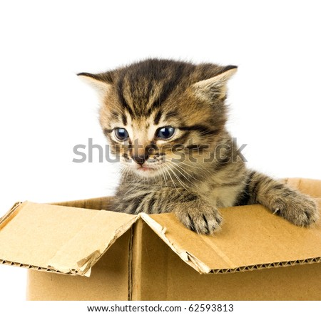 Small kitten in box