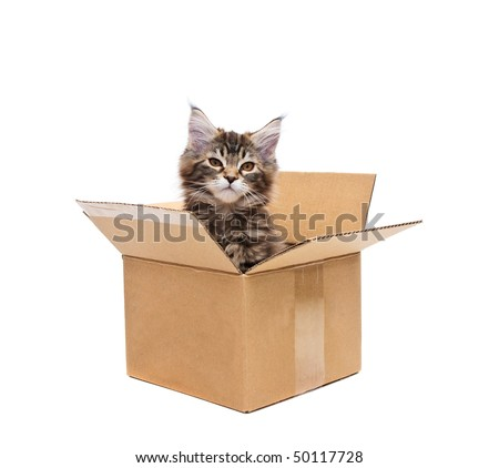 small kitten in box against white background