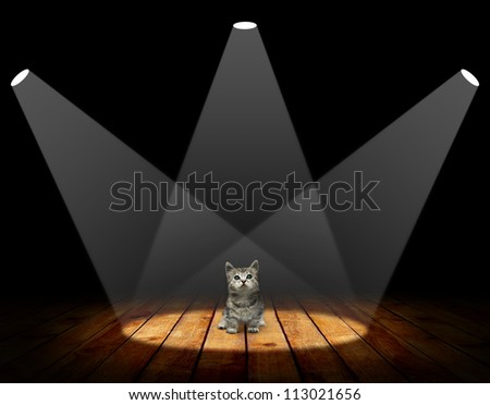 Small kitten in empty room with wooden floor and spot light interior background