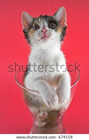 Small kitten inside a vase over pink background