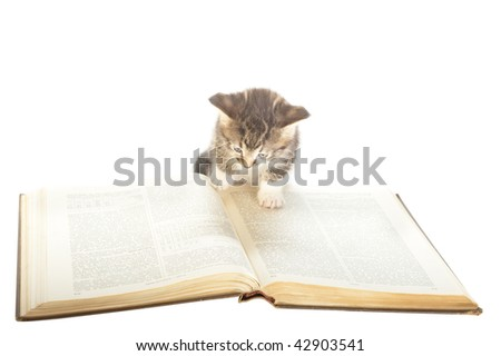 small kitten inspecting  large foreign reference book as if reading it