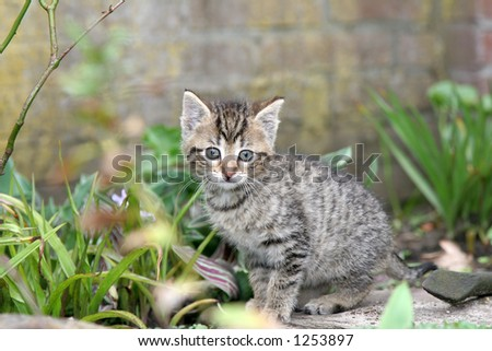 Small kitten looking curiously into the garden