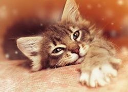 Small kitten lying on sofa