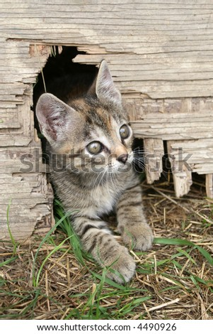 Small kitten peeking from the hole