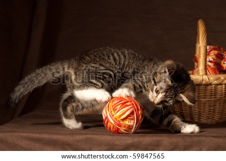 Small kitten playing with balls of threads and other knitting accessories