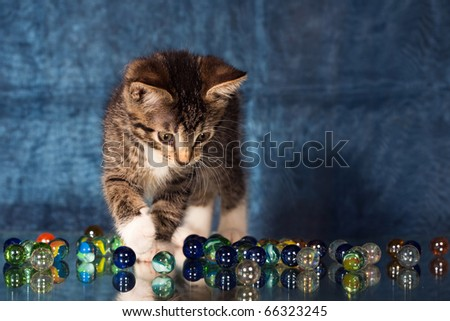 Small kitten playing with glass marbles