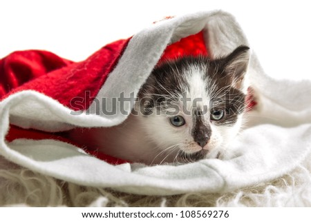 Small kitten sitting in a Santa Claus hat