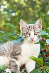 Small kitten sitting on the cherry tree