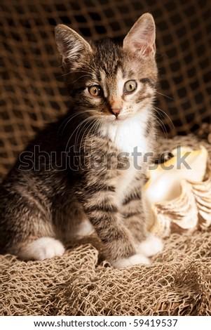 Small kitten sitting on the fisherman's net