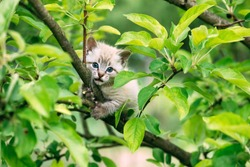Small kitten with blue ayes stuck on green tree on garden. Animal photography