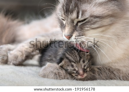 small kitten with mother close up #191956178