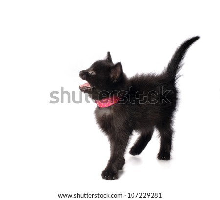 Small kitten with ribbon isolated on white background - stock photo