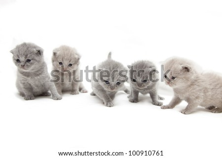 Small kittens are sitting in a row and looking down