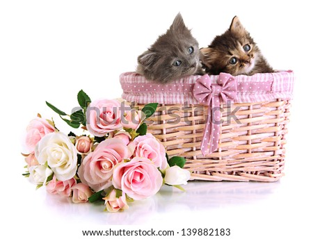 Small kittens in basket isolated on white